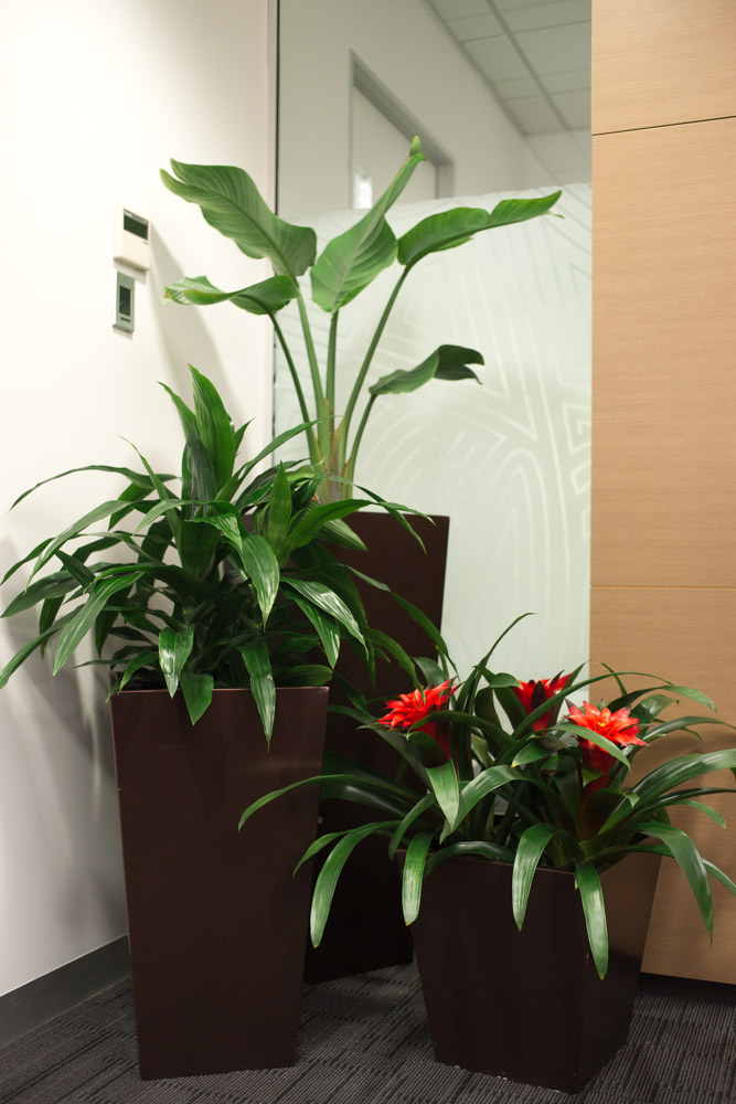design office indoor plants
