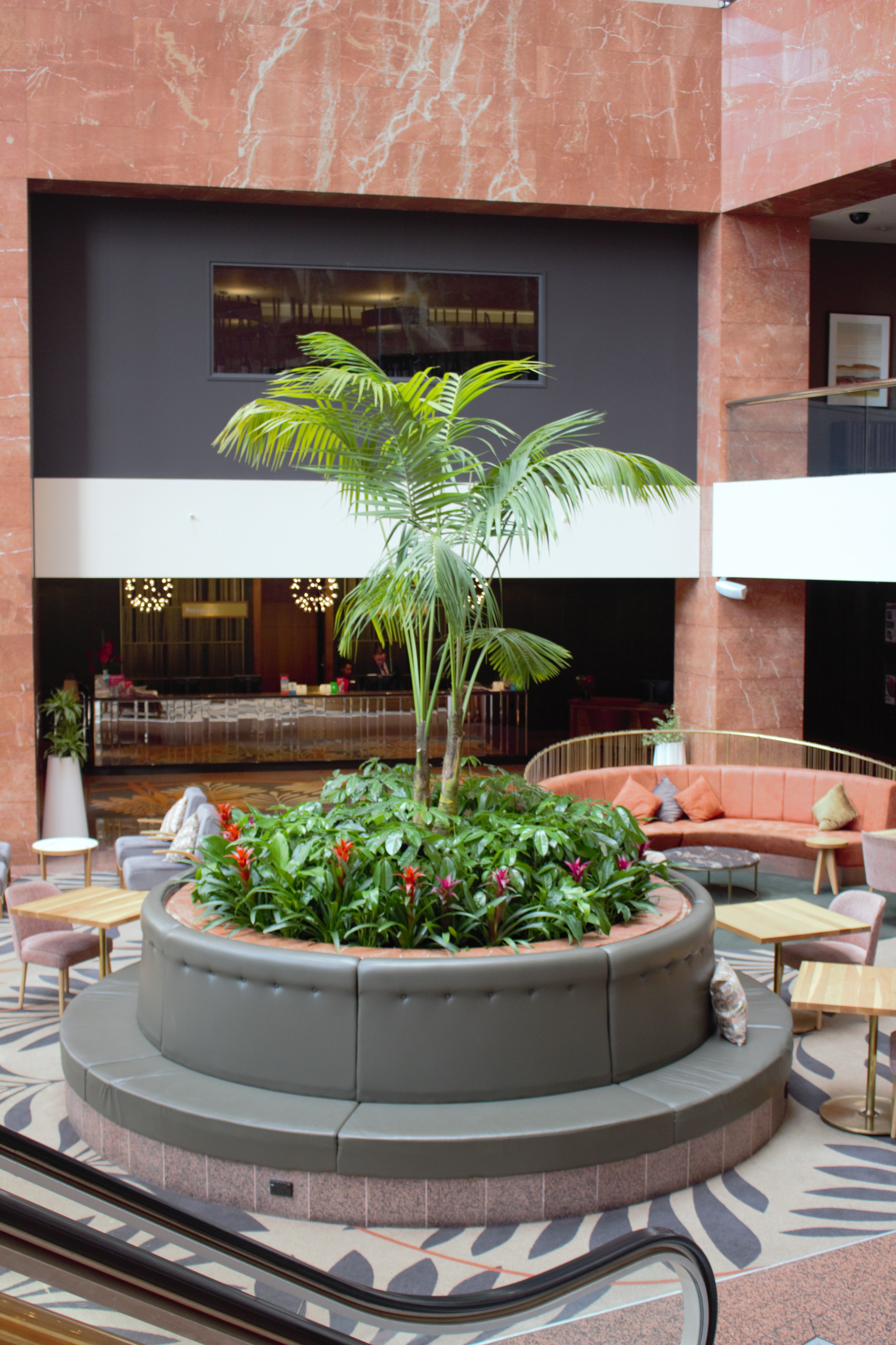IKP5_IFP2_IBR1___Kentia_Palm__Schefflera_Amate_and_Bromeliad_in_Atrium_Garden___Grand_Millenium_hotel