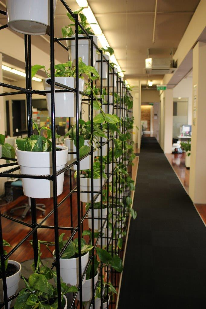 green wall for office indoor plant