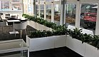 Peace lilies in troughs to partition the space - Fieldays 2018