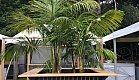Large Kentia palms staged in custom box for the Heineken stand at ASB Tennis by Dark Horse