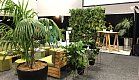 Green Lounge - Hononga Lounge for CINZ Meetings 2019 - Plant Wall, Grid Frame and multi planted Kentias.