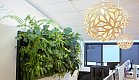 A very tropical live wall, creates a environment where people feel good and relaxed