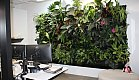 Air cleaner, mood booster and relaxation enhance... This live green wall is nearly magical