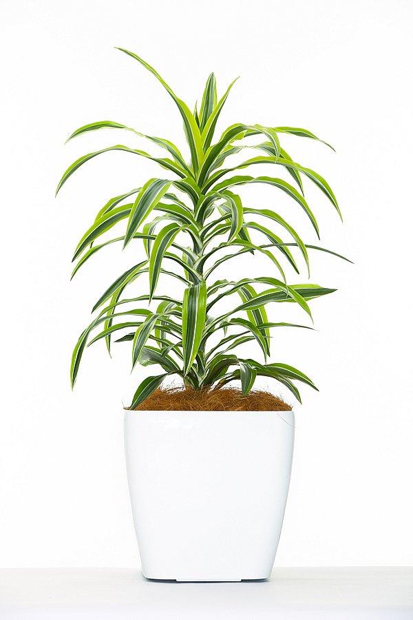Hire Plants Plant Catalogue Hire Plants